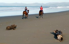 Afternoon ride on the beach (mpp26) Tags: horse dog beach log afternoon ride hills spencerpark