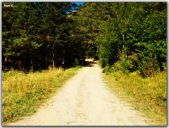 Por el camino... (Nati C.) Tags: naturaleza camino paisaje andorra pirineos massana efectoorton