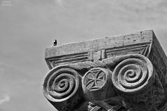 Bird. 2014. (Sasha_mac) Tags: sky bw bird texture stone architecture armenia        zvartnoc