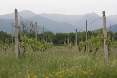 (Khuroshvili Ilya) Tags: sky mountains nature clouds canon georgia landscape spring wine horizon country perspective vine sakartvelo 2014 kaukasus kakheti nvbr nvbr11 alazaniwalley