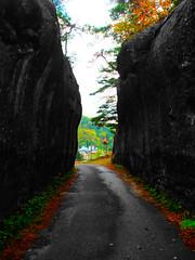 وانا طالع من وحدة من #الغابات خلال #رحلتي بالدراجة في #اليابان في #جزيرة #هونشو كان قدامي الممر هذا وكان منظرة جميل خصوصا انه مظلم و تقدر تشوف #القرية في الجهه الثانية ،تم اختيار هذه #الصورة من ظمن المجموعة الي راح ابروزها  through my #trip in #Japan by # (Omar Alomairالرحالة عمر العمير) Tags: trip blackandwhite color beautiful bike bicycle japan island cyclist village view cross forrest الصورة honshu رحلتي دراجة جزيرة القرية اليابان bicyclelove الغابات دراجتي هونشو
