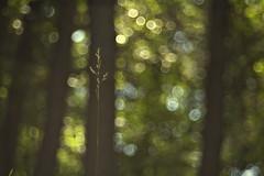my sanctuary (c'lamson (off/on)) Tags: trees green grass garden bokeh sanctuary clamson
