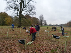 Tree planting in full swing on Bourne Park