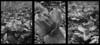 Skunk Cabbage Triptych (ChrisWarren1956) Tags: blackandwhite analog perception triptych trix halfframe rebirth fertility springtime pend skunkcabbage fecund saveearth