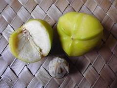 Jarak tintir (Nelindah) Tags: euphorbiaceae coralplant physicnut guatemalarhubarb taxonomy:family=euphorbiaceae geo:country=indonesia taxonomy:binomial=jatrophamultifida jaraktentir nelindah benqac100 pohonyodium daunyodium