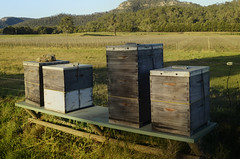 Krinklewood biodynamic boxes (Palmou) Tags: vineyard farm winery nsw boxes organic broke preparation huntervalley biodynamic cowhorn krinklewood