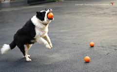 20140629_08516_ (Redhat/) Tags: dog redhat