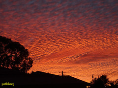 A winters sunset from my garden. (pat.bluey) Tags: sunset sonnenuntergang australia newsouthwales blacktown 1001nights mygarden coucherdesoleil coth coth5 1001nightsmagiccity patbluey commentbygwlap