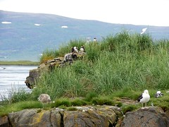DSCN0498 (ilveraldino) Tags: park islands boat iceland tour national puffin peninsula archipelago stykkishlmur snfellsnes snaefellsnes borgarnes