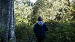 Liffey Falls Track