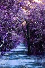 The Road to the Wonderland..