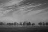 Country NSW (Richard Sollorz Photography) Tags: mist australia most bathurst morningmist countrynsw treesinfog treesinmist australiacountryside nswcountry fifthgearphotography richardsollorz