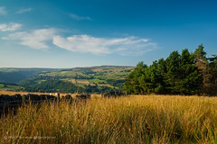 Valley view from moor's edge (Rory Prior) Tags: grass landscape evening woods yorkshire moor calderdale mytholmroyd erringden