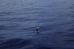 TRANSAT2014-DAY_06-03 (PedroEA.) Tags: ocean sunset sea mar atlantic sail vela passage crusing navegar navigation atlantico velejar