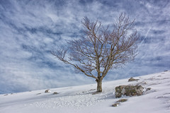 Pagoa (joxelu.) Tags: paisaje pirineos pyrenes haya hielo winter naturaleza navarra nafarroa nature negua nieve montaña montagne minimal mendia eski quinto real alpino arbol tree