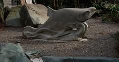 DSC_0907 (Copy) (pandjt) Tags: harrisonhotsprings bc britishcolumbia salmon salmonsculpture sculpture publicart