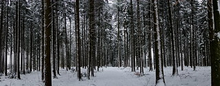 Winterwald auf dem Horben