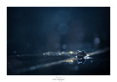 Effervescence nocturne (Naska Photographie) Tags: naska photographie photo photographe paysage proxy proxyphoto macro macrophotographie macrophoto nuit night nocturne dark darkness amphibien batracien crapaud bufo marais eau bleu monochrome blue ambiance color couleur bokeh