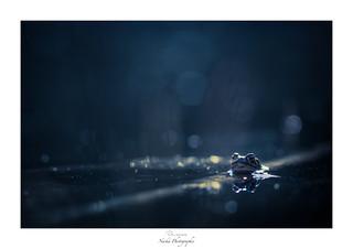 Effervescence nocturne