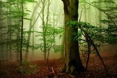 Tales (BphotoR) Tags: bphotor fog forest wald nebel märchen fairytale odenwald