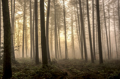 Breaking Sun (darrenball189) Tags: forest fog nature woodland landscape mist tree morning beautiful scenery foggy dawn view misty light wood sunlight shadow season pine wilderness dark woods countryside trees foliage silhouette scene plant