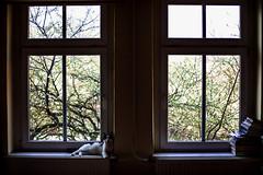 louis in the window (ewitsoe) Tags: cat home window tree light yawn lazy kitten books ledge big sunny spring cats ewitsoe erikwitsoe canon 50mm eos 5ds love heart louisthecat