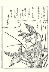 Chinese arrowhead (Japanese Flower and Bird Art) Tags: flower chinese arrowhead sagittaria trifolia alismataceae shunsen ooka kano woodblock picture book japan japanese art readercollection