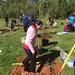 Highland_Renaissance_Tree_Planting_Event_2017 (49)