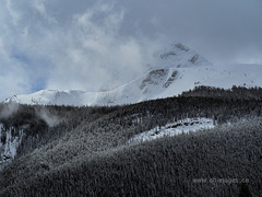 Snow covered Trees Banff National Park II (C_B_Images) Tags: spring nature canada banffnationalpark alberta 150