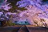 蹴上インクラインの桜(京都の夜桜シリーズその4)
