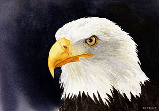 Bald Eagle (watercolor painting)
