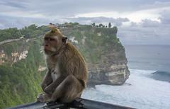 Pura Luhur Uluwatu (Juanjo RS) Tags: juanjors bali indonesia uluwatu temploluhuruluwatu templo temple mono macaco monkey asia acantilado nikon nikond7100 amateur travel viajar love flickr bukit denpasar beach mar agua traveling
