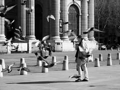 The birds (no sabemos cómo llamarnos) Tags: streetphotography street photoderue urbanphotography urban fotourbana fotocallejera pájaro palomas colombes pigeons blancoynegro blackandwhite noiretblanc plaza