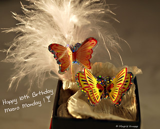 Happy Birthday Macro Monday ;-)