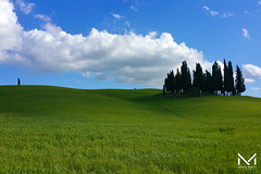 _MBP2011 (manuelbinettiphotography) Tags: trees sky travel blue minimal sunlight light clouds cloudscape cloudy italy tree beautiful green details countryside italia cloud hill hills florence toscana tuscany italian cypress val dorcia cypresses pienza san quirico cipressi