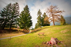 Trees of today, trees of yesterday (Bayern) (armxesde) Tags: pentax ricoh k3 deutschland germany bayern baviera bavaria grainau tree baum bench bank wiese