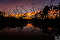 Puddle (Joel Bramley) Tags: sunrise grass tress morning nature landscape puddle
