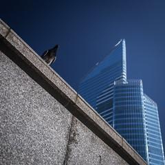 Les cols gris de la Défense (tyepaprocki) Tags: pigeons tours défense pause seul tower business