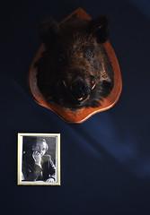 de Echoput (Trang  C-Cat ) Tags: hotel echoput boar wild frame wall decoration interior dutch hospitality bar blue vintage wildboar head animal nikon light shadow shadows d3300 portrait guy man history netherlands