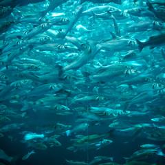 Fish (milo42) Tags: blue 2017 color water httpwwwchrisnewhamphotographycouk loro park fish httpwwwloveoflandscapecom tenerife loropark