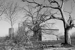 just hangin in there (WORLDS APART PHOTO) Tags: monochrome barn silo oldtree hangininthere almostgone rural rustic ruraldecay rusticrural agriculturaldecay agriculturalbarns agriculture farming romeoville illinois romeovilleillinois outdoors