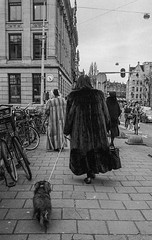 Sausage dog hunting fur coats (Jules-Emile) Tags: analog black blackandwhite brussel brussels candid city contrast leica liht r5 shadow street urban white people man woman kid dog composition light film negative sun night day coat metro tram bus vivid face old young model architecture abstract travel europe belgium iso 35mm 1600 fuji kodak ilford dark room monochrome duotone grayscale car transport public men women walk alley road concrete