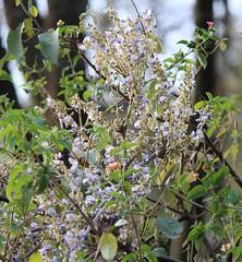 Wild flowers (prasanth_p_jose) Tags: iitmandikamandcampus landscape floraandfauna