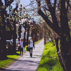 IMG_5200 (TuddMSK) Tags: nature portrait action landscape leaves spring cherry blossom tree outdoors canon eos 600d digital photography art colors