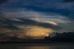Stormcloud (betadecay2000) Tags: stokeshillwharf stokes hill wharf 2017 wetseason season wet darwin northernterritory northern territory wasser water cloud clouds wolken wolke storm gewitter wetter meer see sea weather weer meteo himmel sky heaven topend top end total photography