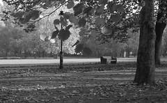 Autumn trees in Szeged (Anoplius) Tags: anoplius nikon nikond40x erzsébet liget népliget szeged hungary ungarn tree baum autumn fall herbst bench bank leaf blatt lamp lampe