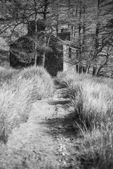 The Path to Plas Cwmorthin (ShrubMonkey (Julian Heritage)) Tags: rhosydd quarry managers house conglog cwmorthin slate disused derelict abandoned forgotten ruin ruined eerie landscape valley wales building secluded isolation mountains snowdonia sonyalpha plascwmorthin