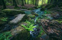 Ferntasia (@hipydeus) Tags: farn fern bayern bavaria märchenwald nature landscape clreek bach rocks felsen moos