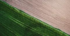 İlk (ahmetaliagır) Tags: djiglobal djitürkiye dji down looking phantom crops harvest farming lookdown rural agriculture crop food aerial plant natural field turkey tekirdag hayrabolu red brown green farmland wheat farm