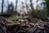 hammerheads (severalsnakes) Tags: 365 kansas m3528 pentax saraspaedy shawnee shawneemissionpark flower k1 manual manualfocus wildflower